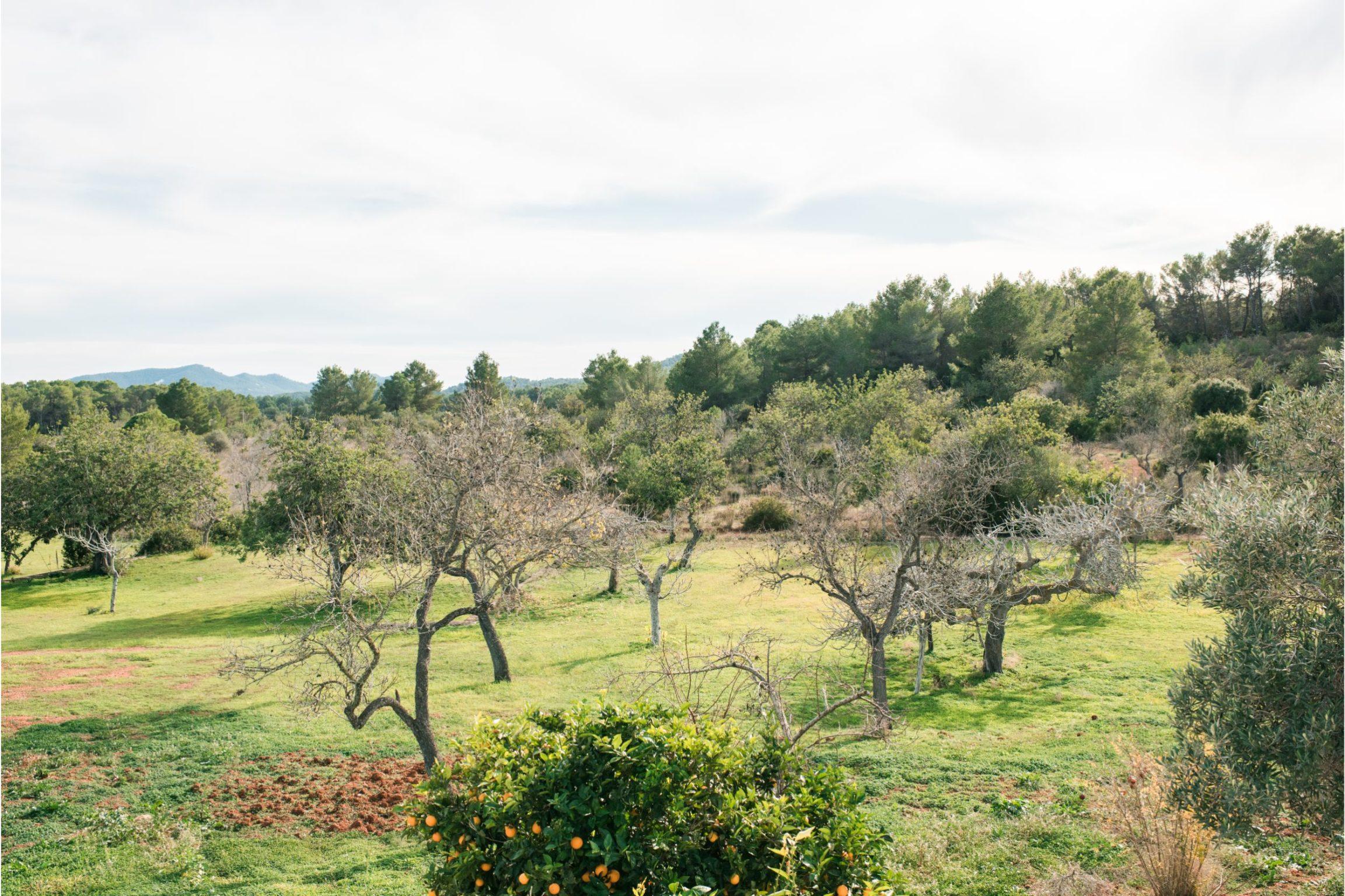 https://www.white-ibiza.com/wp-content/uploads/2020/02/white-ibiza-villas-villa-balafia-outdoors-countryside-2305x1536.jpg