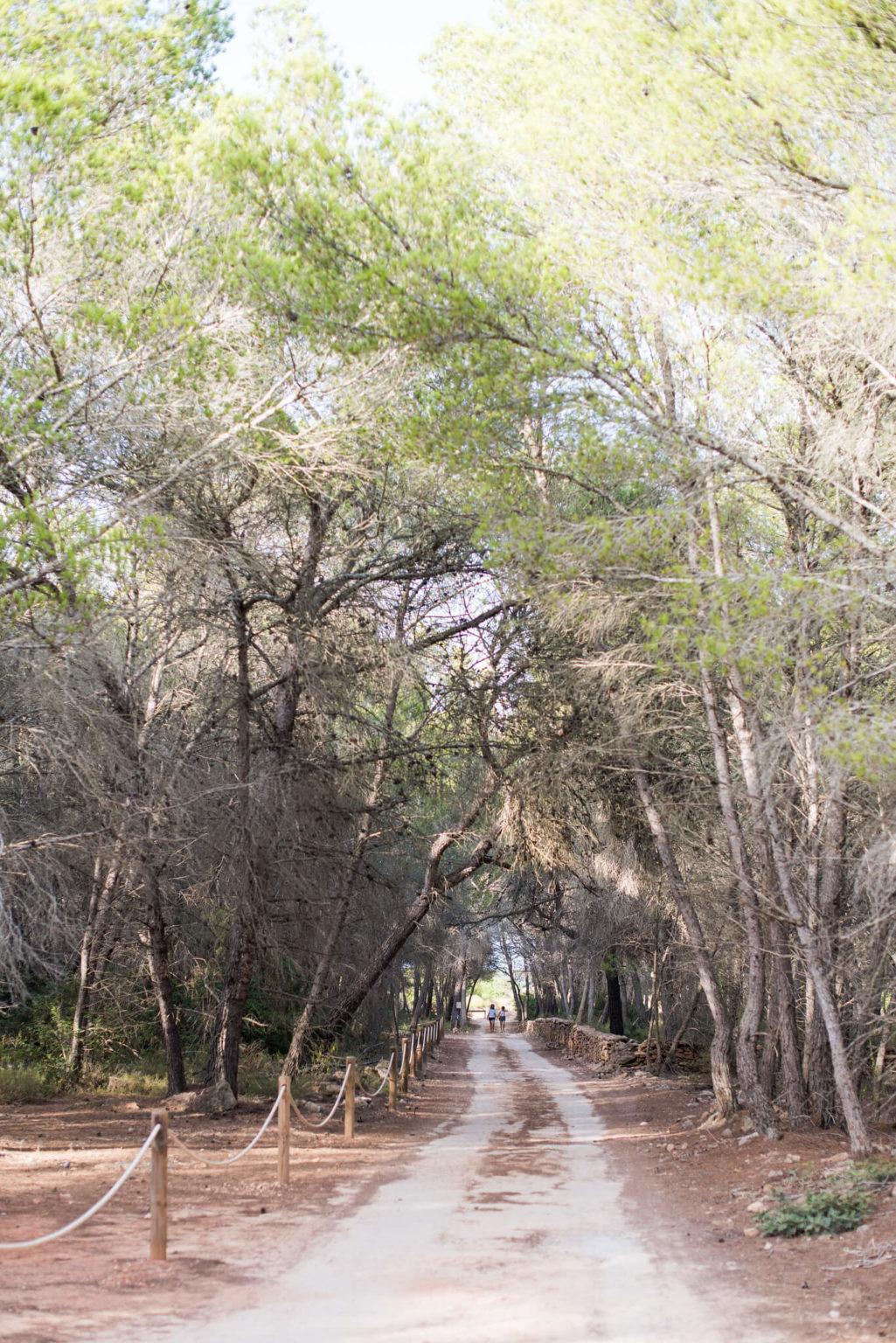 https://www.white-ibiza.com/wp-content/uploads/2020/03/formentera-bike-trails-2020-05-1025x1536.jpg