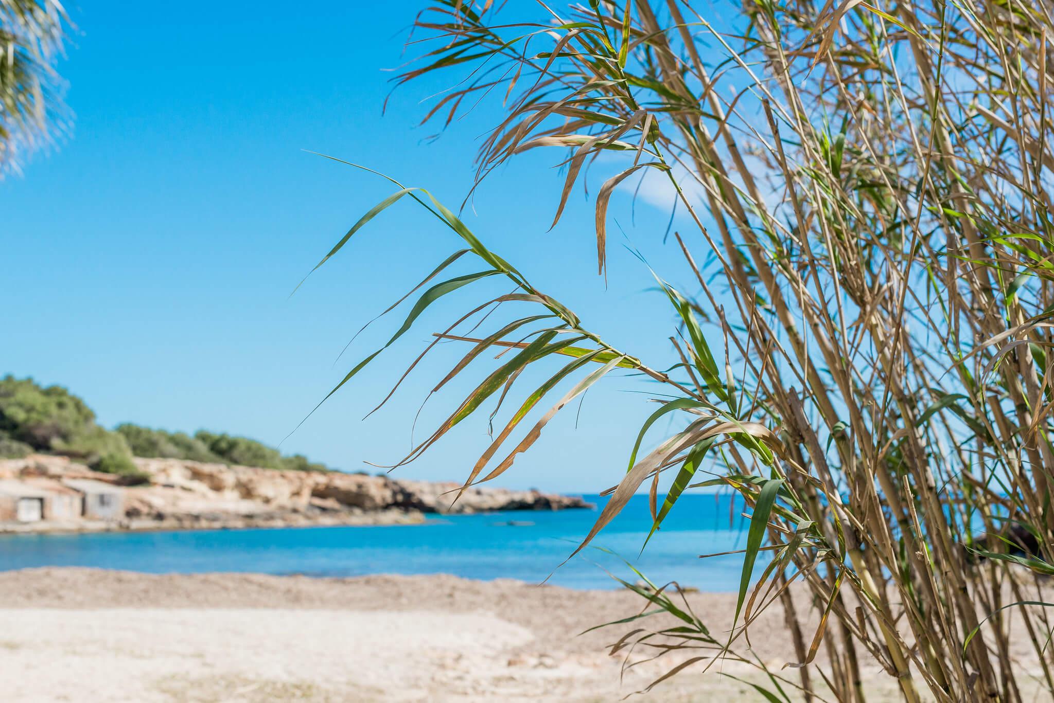 https://www.white-ibiza.com/wp-content/uploads/2020/03/ibiza-beaches-sestanyol-02.jpg