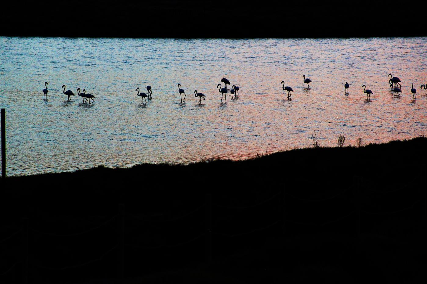 https://www.white-ibiza.com/wp-content/uploads/2020/03/white-ibiza-sunsets-coricancha-2020-01.jpg
