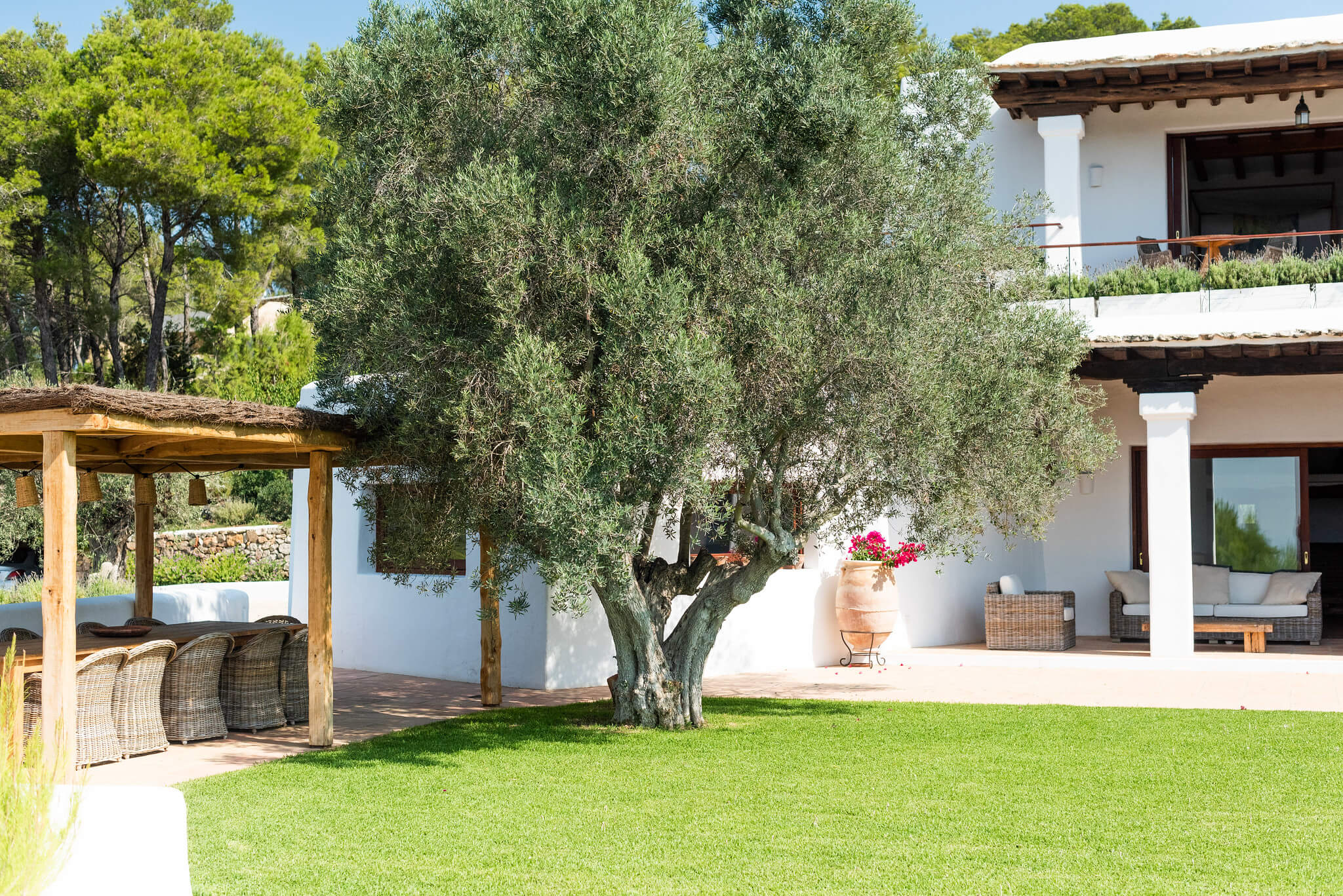 https://www.white-ibiza.com/wp-content/uploads/2020/05/white-ibiza-villas-can-lavanda-olive-tree.jpg