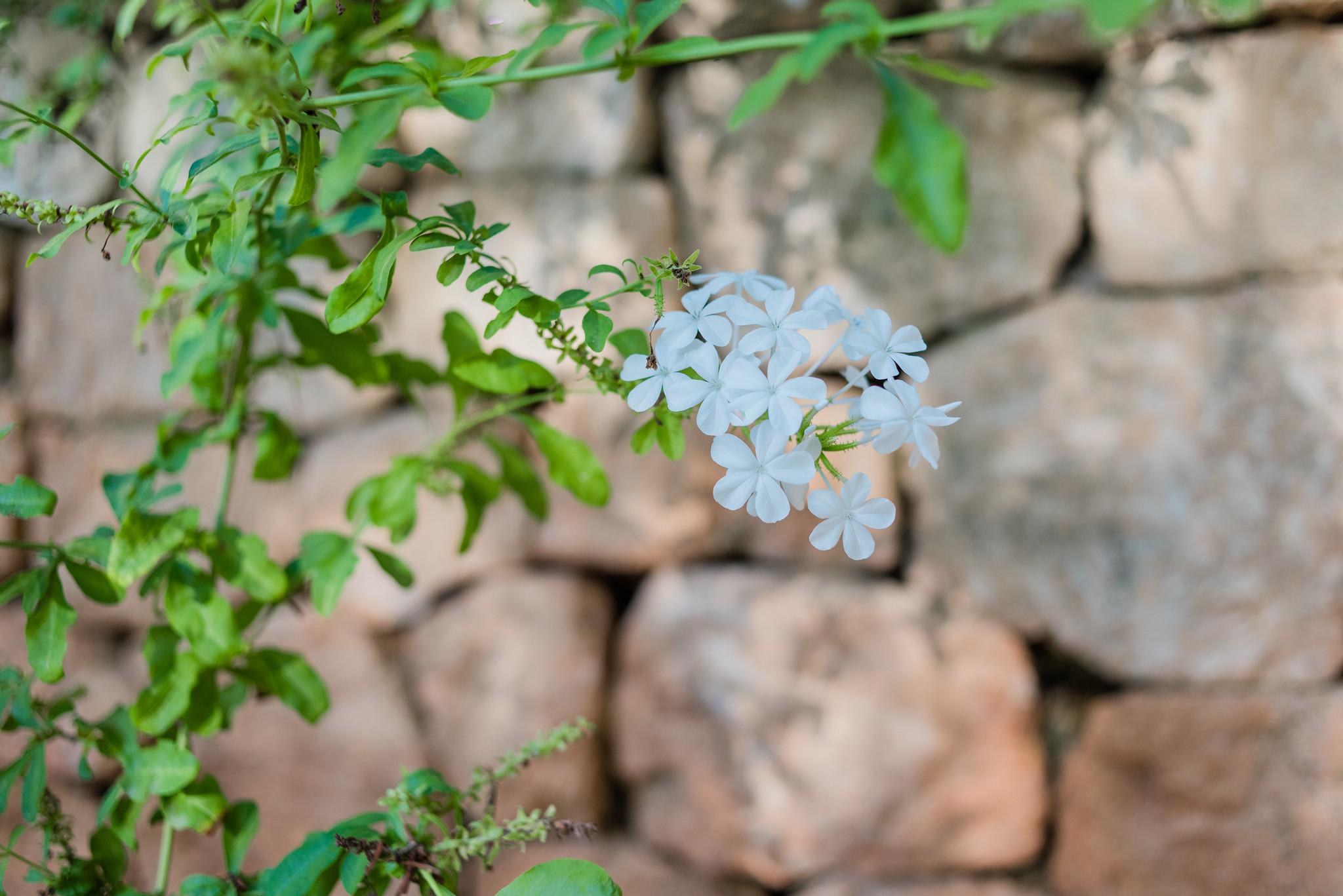 https://www.white-ibiza.com/wp-content/uploads/2020/05/white-ibiza-villas-casa-amalia-exterior-flower.jpg