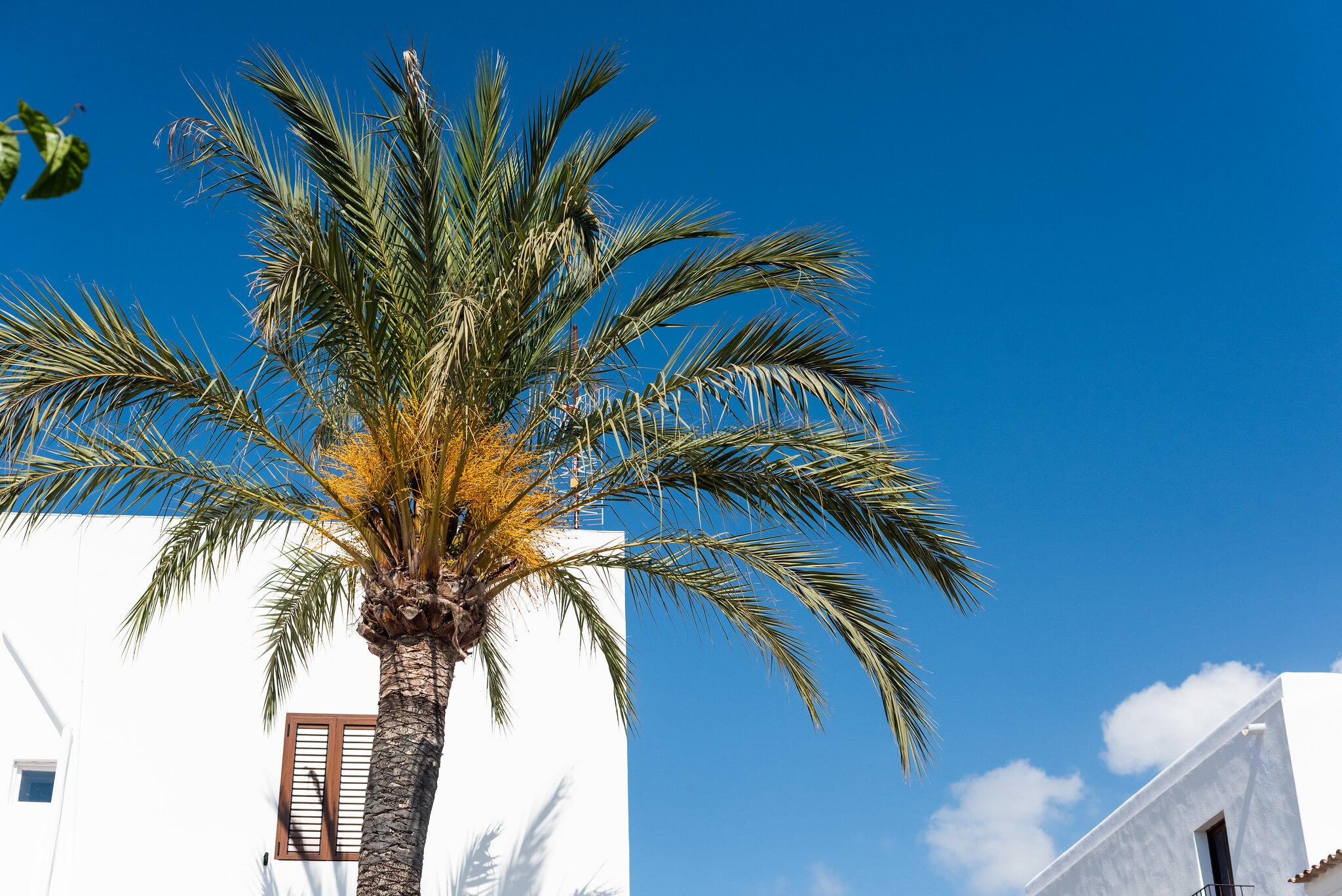 https://www.white-ibiza.com/wp-content/uploads/2020/05/white-ibiza-villas-where-to-buy-san-juan-08.jpg