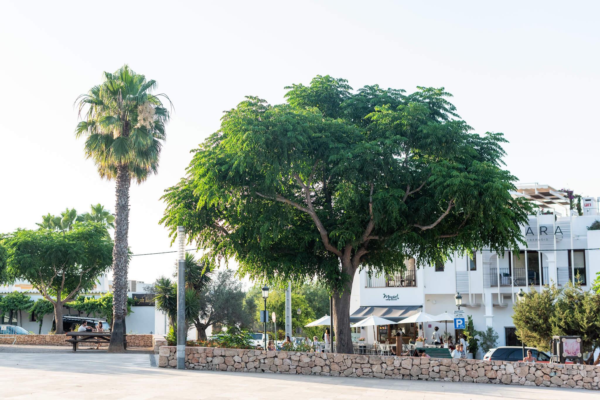 https://www.white-ibiza.com/wp-content/uploads/2020/05/white-ibiza-villas-where-to-stay-santa-gertrudis-07.jpg