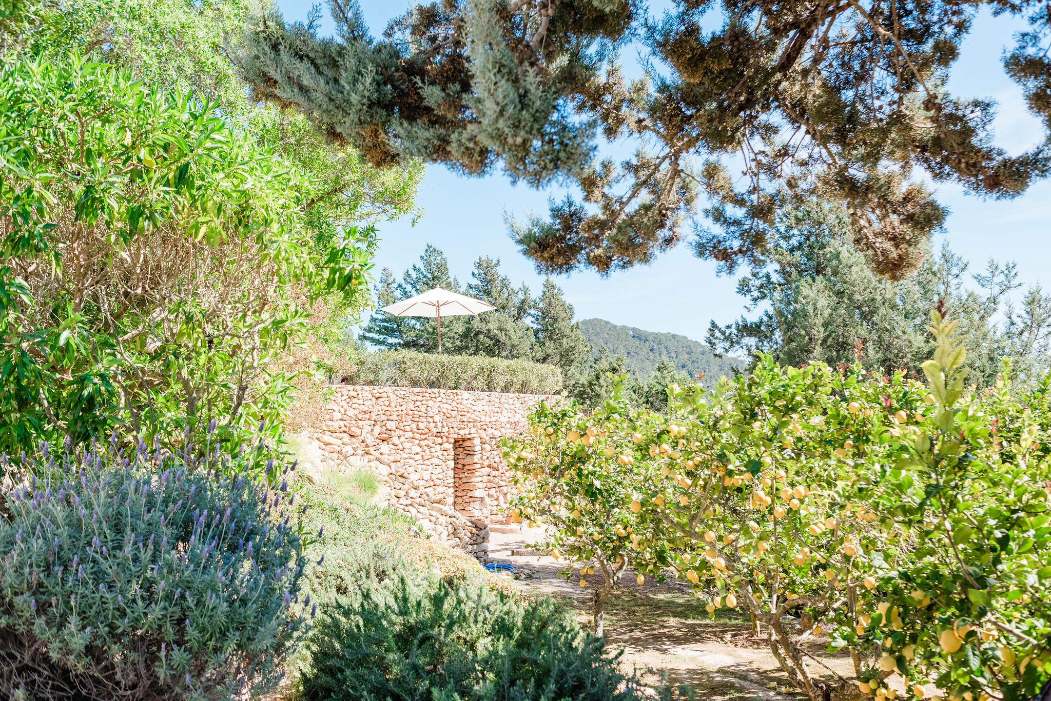 https://www.white-ibiza.com/wp-content/uploads/2020/06/white-ibiza-villas-villa-andrea-exterior-citrus-groves.jpg